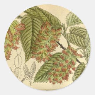 Carpinus japonica, Betulaceae Classic Round Sticker