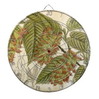 Carpinus japonica, Betulaceae Dartboard