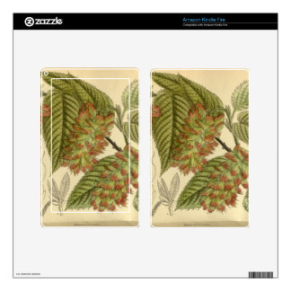 Carpinus japonica, Betulaceae Decals For Kindle Fire