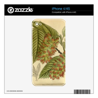 Carpinus japonica, Betulaceae Decals For The iPhone 4