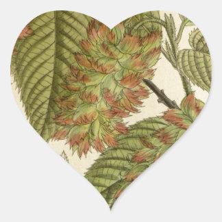 Carpinus japonica, Betulaceae Heart Sticker
