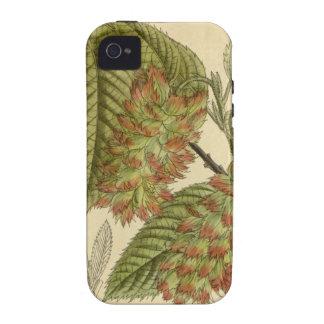 Carpinus japonica, Betulaceae iPhone 4 Cover
