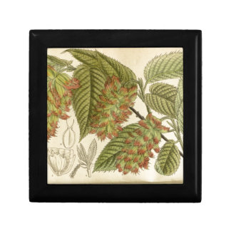 Carpinus japonica, Betulaceae Keepsake Box