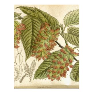 Carpinus japonica, Betulaceae Letterhead