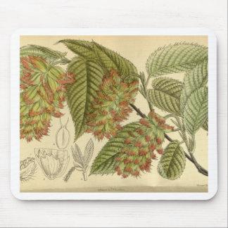 Carpinus japonica, Betulaceae Mouse Pad
