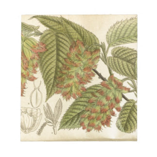 Carpinus japonica, Betulaceae Notepad