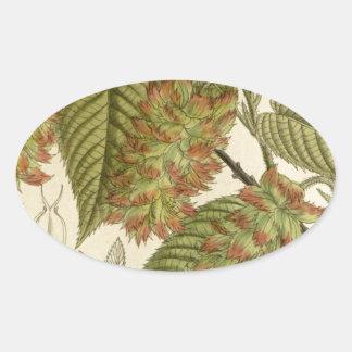 Carpinus japonica, Betulaceae Oval Sticker