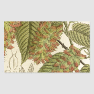 Carpinus japonica, Betulaceae Rectangular Sticker