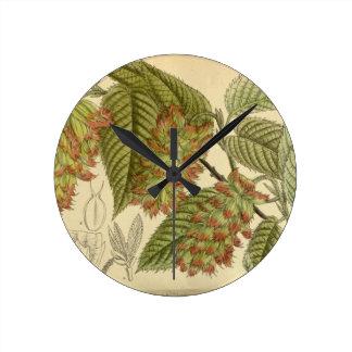 Carpinus japonica, Betulaceae Round Clock