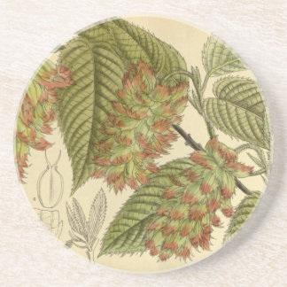 Carpinus japonica, Betulaceae Sandstone Coaster
