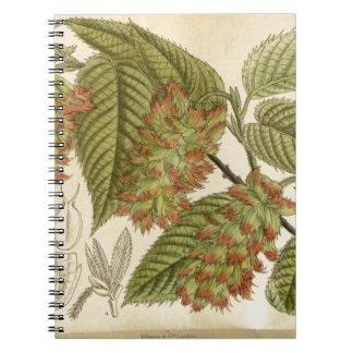 Carpinus japonica, Betulaceae Spiral Notebook