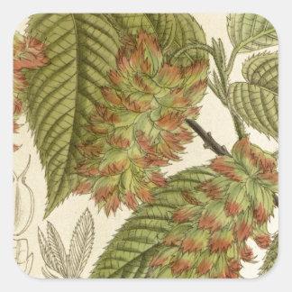 Carpinus japonica, Betulaceae Square Sticker