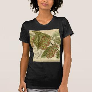 Carpinus japonica, Betulaceae T Shirt