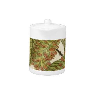 Carpinus japonica, Betulaceae Teapot