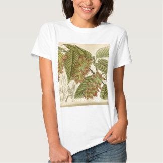 Carpinus japonica, Betulaceae Tee Shirt