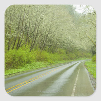 Carretera alejada a través del bosque colcomanias cuadradass