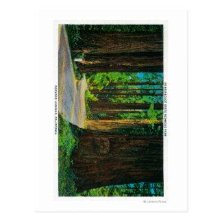Carretera de la secoya en parque de la secoya del postal