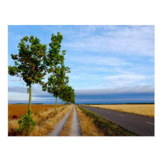 Carretera Hacia Reliegos Postcard