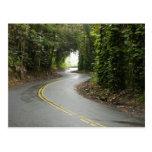 Carreteras con curvas a través de la selva postal