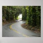 Carreteras con curvas a través de la selva póster