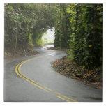 Carreteras con curvas a través de la selva tropica azulejo cuadrado grande