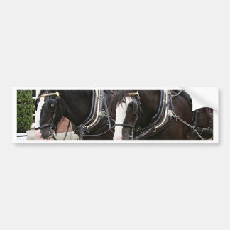 Carriage draft horses bumper sticker