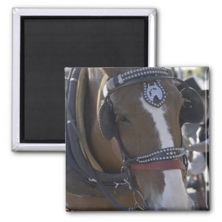 Carriage Horse 2 Inch Square Magnet