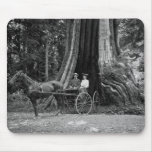 Carriage in the Hollow Tree Mouse Pad