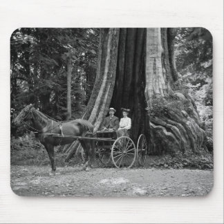Carriage in the Hollow Tree Mousepad