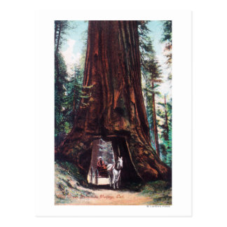 Carriage Travelling Under a Giant Redwood Postcard