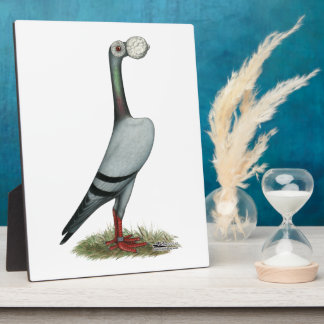 Carrier Pigeon 2012 Display Plaques