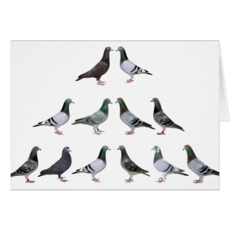 Carrier pigeons champions card