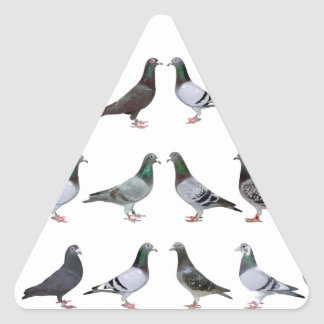 Carrier pigeons champions triangle sticker