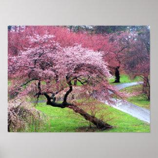 Carril de la flor de cerezo póster