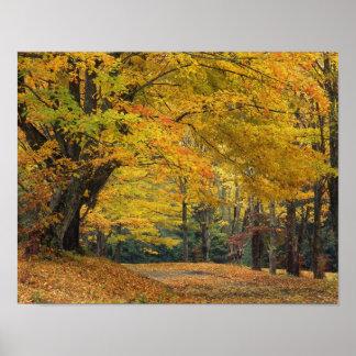 Carril sobresaliente del país del árbol de arce de impresiones