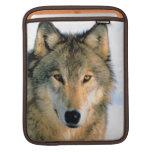 Carrito iPod de la naturaleza del lobo/caja del or Funda Para iPads