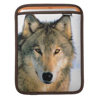 Carrito iPod de la naturaleza del lobo/caja del or Fundas Para iPads