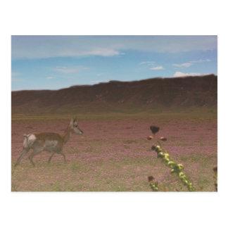 Carrizo Plain National Monument Postcard