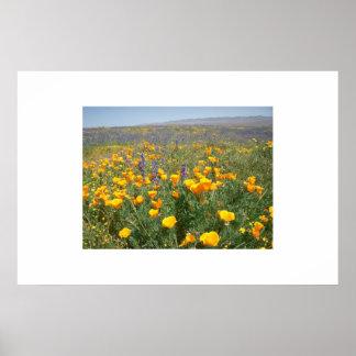 Carrizo Wildflowers Print