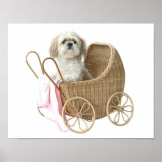 Carro de bebé de Shih Tzu Póster