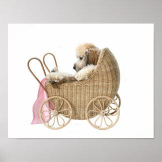 Carro de bebé del caniche póster