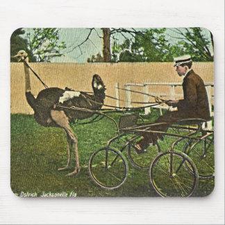 Carro de la avestruz que compite con la postal del alfombrillas de ratones