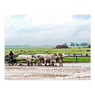 Carro dibujado por el ganado gris húngaro tarjetas postales