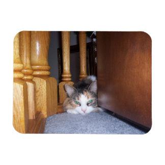Carro el gato imanes flexibles