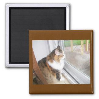 Carro el gato que mira hacia fuera el imán de la v