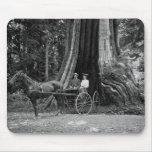 Carro en el árbol de hueco tapete de raton
