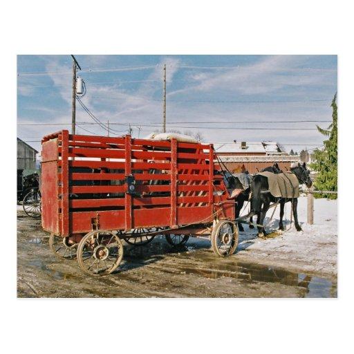 Carro-Postal del ganado de Amish Postales