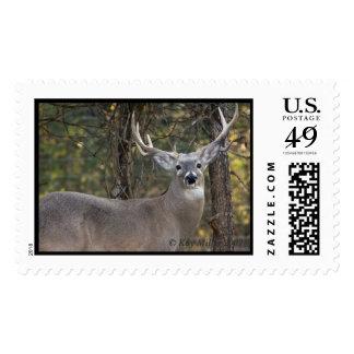 CARROLLS BUCK -1 -07 - Customized Postage Stamp