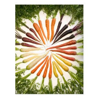 Carrot Color Wheel Postcard