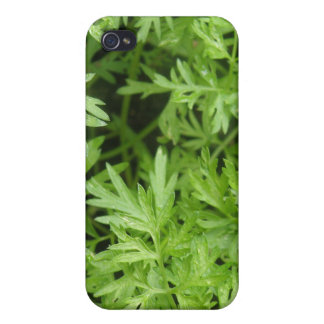 Carrot Tops  iPhone 4 Cover
